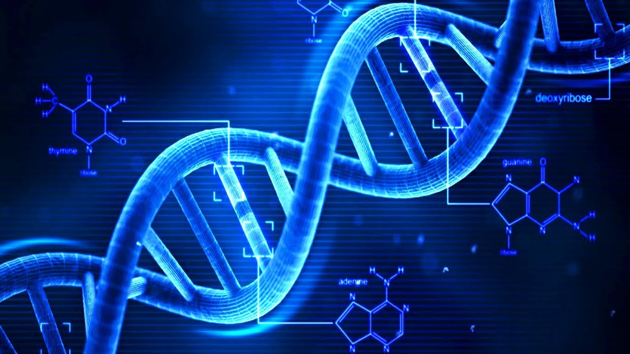 تست DNA جنینی آزاد